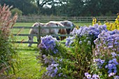 ELLICAR GARDENS, YORKSHIRE - DESIGNER SARAH MURCH - OCTOBER, AUTUMN, VIEW WITH GRASSES AND ASTER LITTLE CARLOW TO HORSES IN FIELD. AUTUMN, COUNTRY GARDEN, ROMANTIC, ROMANCE
