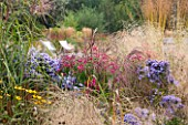 ELLICAR GARDENS, YORKSHIRE - DESIGNER SARAH MURCH - PLANT ASSOCIATION/ PLANT COMBINATION - ASTER ANDENKEN AN ALMA POTSCHKE, MISCANTHUS MALEPARTUS, ASTER LITTLE CARLOW - OCTOBER