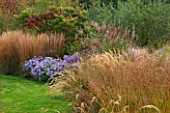 ELLICAR GARDENS, YORKSHIRE - DESIGNER SARAH MURCH - VIEW ALONG PATH WITH CYPERUS LONGUS, ASTER LITTLE CARLOW AND MISCANTHUS KARL FOERSTER - AUTUMN, OCTOBER, COUNTRY GARDEN