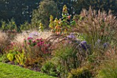 ELLICAR GARDENS, YORKSHIRE - DESIGNER SARAH MURCH - BORDER WITH MOLINIA WINDSPIEL,  ASTER LITTLE CARLOW, ASTER ANDENKEN AN ALMA POTSCHKE - AUTUMN, OCTOBER, COUNTRY GARDEN