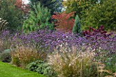 ELLICAR GARDENS, YORKSHIRE - DESIGNER SARAH MURCH - BORDER WITH VERBENA BONARIENSIS, GAURA LINDHEIMERI WHIRLING BUTTERFLIES, PENNISETUM RED BUTTONS, CERCIS FOREST PANSY