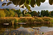 ELLICAR GARDENS, NOTTINGHAMSHIRE: NATURAL SWIMMING POOL / POND - VIEW ACROSS WATER TO DECKING AND CYPERUS LONGUS - WATER, OCTOBER, AUTUMN, COUNTRY GARDEN