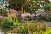 ELLICAR GARDENS, NOTTINGHAMSHIRE: NATURAL SWIMMING POOL / POND - VIEW ACROSS WATER TO GRASSES - MOLINIA ARUNDINACEA KARL FOERSTER - AND ASTERS, OCTOBER, AUTUMN, COUNTRY GARDEN