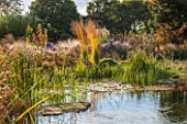 ELLICAR GARDENS, NOTTINGHAMSHIRE: NATURAL SWIMMING POOL / POND - VIEW ACROSS WATER TO GRASSES - MOLINIA ARUNDINACEA KARL FOERSTER - AND WATERLILIES, OCTOBER, AUTUMN, COUNTRY GARDEN