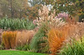 RHS GARDEN, WISLEY, SURREY: GRASS BORDER BESIDE MAIN LAWN WITH PAMPAS GRASS, PANICUM NORTHWIND, MOLINEA CAERULEA SUBSP ARUNDINACEA KARL FOERSTER, AUTUMN, OCTOBER