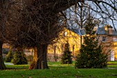 CASTLE HOWARD, YORKSHIRE: CHRISTMAS - CHRISTMAS TREE IN FRONT OF THE STABLE BLOCK ON LAWN WITH LIGHTS - WINTER, DECORATION, DECORATIVE, NOVEMBER