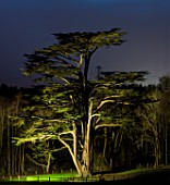 PAINSHILL PARK, SURREY: MASSIVE CEDAR OF LEBANON TREE LIT UP AT NIGHT - LIGHTING, HISTORIC, LAKE, WATER, LANDSCAPE, WINTER, DECEMBER, CHRISTMAS