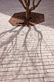 MUCEM, MARSEILLES, FRANCE: THE JARDIN DE MIGRATIONS, FORT SAINT - JEAN. TREE WITH RUSTY METAL PROTECTION AROUND ROOTS. ROOF GARDEN, TERRACE, SHADOW, SHADOWS