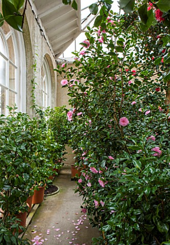 CHATSWORTH_HOUSE_DERBYSHIRE_THE_GREENHOUSE_BUILT_FOR_FIRST_DUKE_OF_DEVONSHIRE__IT_HOUSES_PART_OF_THE