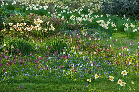 PETTIFERS_GARDEN_OXFORDSHIRE_DESIGNER_GINA_PRICE_MEADOW_AND_LAWN_WITH_DAFFODILS_ANEMONE_BLANDA_AND_S