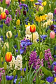 KEUKENHOF GARDENS, HOLLAND. TULIP MEADOW - HYACINTH CITY OF HAARLEM AND PAUL HERMAN, TULIPS WORLD PEACE, AVIGNON, FRITILLARIA IMPERIALIS LUTEA. ANEMONE CORONARIA FOKKER, SPRING