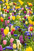 KEUKENHOF GARDENS, HOLLAND. TULIP MEADOW - HYACINTH CITY OF HAARLEM AND PAUL HERMAN, TULIPS WORLD PEACE, AVIGNON, SUNNY PRINCE, FRITILLARIA IMPERIALIS LUTEA. ANEMONE FOKKER,