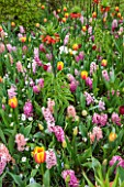 KEUKENHOF GARDENS, HOLLAND: THE NETHERLANDS - PLANT ASSOCIATION - FRITILLARIA IMPERIALIS RUBRA, HYACINTH FONDANT, HYACINTH PINK PEARL, TULIP APRICOT PARROT, TULIP WORLD PEACE