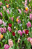 KEUKENHOF GARDENS, HOLLAND: THE NETHERLANDS - PLANT ASSOCIATION - HYACINTH FONDANT, HYACINTH PINK PEARL, HYACINTH GIPSY QUEEN, TULIP WORLD PEACE, TULIP NATIONAL VELVET