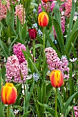 KEUKENHOF GARDENS, HOLLAND: THE NETHERLANDS - PLANT ASSOCIATION - HYACINTH PINK PEARL, HYACINTH GIPSY QUEEN, TULIP WORLD PEACE, TULIP APRICOT PARROT, TULIP NATIONAL VELVET
