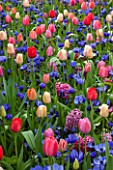 KEUKENHOF GARDENS, HOLLAND: THE NETHERLANDS - PLANT ASSOCIATION - SPRING - ANEMONE CORONARIA MR FOKKER, TULIPA BIG PRIDE MIXTURE. HYACINTH GIPSY QUEEN AND MISS SAIGON