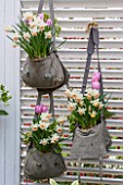 KEUKENHOF GARDENS, HOLLAND: THE NETHERLANDS - RECYCLING GARDEN - OLD SATCHELS PLANTED WITH NARCISSI AND TULIPS - NARCISSUS, CONTAINER, REUSED, RECYCLING, UPCYCLED, TRELLIS