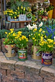 KEUKENHOF GARDENS, HOLLAND: THE NETHERLANDS - RECYCLING GARDEN - OLD FOOD CANS PLANTED WITH YELLOW NARCISSUS, CONTAINER, REUSED, RECYCLING, UPCYCLED, TRELLIS, WALL