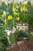 KEUKENHOF GARDENS, HOLLAND: THE NETHERLANDS - RECYCLING GARDEN - OLD OLIVE CAN AND MUG  PLANTED WITH NARCISSUS AND HYACINTHS, CONTAINER, REUSED, RECYCLING, UPCYCLED. WALL