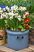 KEUKENHOF GARDENS, HOLLAND: THE NETHERLANDS - RECYCLING GARDEN - STONE WALL, OLD METAL BREAD BIN PLANTED WITH DAFFODILS AND PRIMULAS.CONTAINER, REUSED, RECYCLING, UPCYCLED, MUSCARI