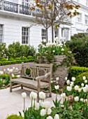 DESIGNER STEPHEN WOODHAMS, LONDON: FORMAL TOWN GARDEN IN SPRING -CONTAINER AND WOODEN BENCH / SEAT, WHITE PLANTING OF TULIP PURISSIMA, TULIP CARDINAL MINDSZNTY, TULIP CLEARWATER