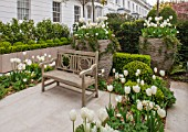 DESIGNER STEPHEN WOODHAMS, LONDON: FORMAL TOWN FRONT GARDEN - BENCH / SEAT, BOX, PAVING, CONTAINERS. TULIPS PURISSIMA, CLEARWATER AND CARDINAL MINDSZENTY, HYACINTH WHITE PEARL