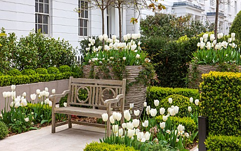 DESIGNER_STEPHEN_WOODHAMS_LONDON_FORMAL_TOWN_FRONT_GARDEN__BENCH__SEAT_BOX_PAVING_CONTAINERS_TULIPS_
