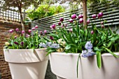 DESIGNER STEPHEN WOODHAMS, LONDON: SMALL BACK GARDEN - CONTAINERS IN SPRING - TULIP REMS FAVOURITE AND FONTAINBLEAU, HYACINTH  WOODSTOCK AND HYACINTH BLUE EYES. TRELLIS