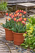 WHICHFORD POTTERY, WARWICKSHIRE: TERRACE WITH TERRACOTTA CONTAINERS PLANTED WITH TULIP PRINSES IRENE - CONTAINER, APTIO, MAY, SPRING, FLOWERS, FLOWERING, PETALS, FLOWER