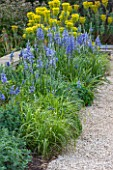 BROUGHTON GRANGE, OXFORDSHIRE: THE LOWER  PARTERRE - BORDER BESIDE WALL WITH EUPHORBIAS AND CAMASSIAS - BLUE, FLOWERS, CAMASSIA