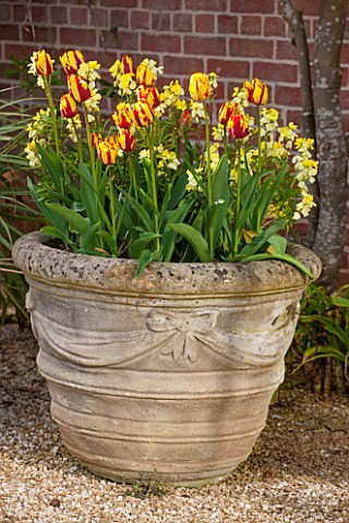 BROUGHTON_GRANGE_OXFORDSHIRE_TERRACOTTA_CONTAINER_IN_THE_WALLED_GARDEN_PLANTED_WITH_WALLFLOWER_TREAS