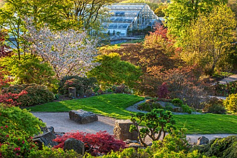 RHS_GARDEN_WISLEY_SURREY_ROCK_GARDEN__CLOUD_PRUNED_CLIPPED_TOPIARY_LARIX_KAEMPFERI_AND_VIEW_TO_GLASS
