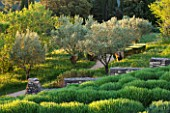 LA JEG, PROVENCE, FRANCE: DESIGNER ANTHONY PAUL - CLIPPED LAVENDER , OLIVE TREES, IN SPRING. MEDITERRANEAN, GARDEN, GREEN, PROVENCE, PROVENCAL, MAY