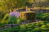 LA JEG, PROVENCE, FRANCE: DESIGNER ANTHONY PAUL - CLIPPED LAVENDER , OLIVE TREES, BLUE IRISES, SPRING. MEDITERRANEAN, GARDEN, GREEN, PROVENCE, PROVENCAL, MAY