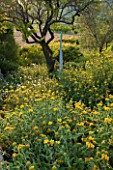LA JEG, PROVENCE, FRANCE: WILD GARDEN WITH YELLOW FLOWERS OF PHLOMIS FRUTICOSA IN SPRING WITH SCULPTURE - MENHIR GERMANT BY PHILIPPE ONGENA