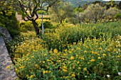 LA JEG, PROVENCE, FRANCE: WILD GARDEN - WALL WITH YELLOW FLOWERS OF PHLOMIS FRUTICOSA IN SPRING WITH SCULPTURE - MENHIR GERMANT BY PHILIPPE ONGENA