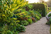 ARUNDEL CASTLE GARDENS, WEST SUSSEX: BORDER IN THE STUMPERY  WITH GRAVEL AND DICKSONIA ANTARCTICA. FERN, FERNS, TREE FERN, TREE FERNS, SHRUBS, HEDGE, HEDGING, GRAVEL, SUMMER