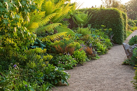 ARUNDEL_CASTLE_GARDENS_WEST_SUSSEX_BORDER_IN_THE_STUMPERY__WITH_GRAVEL_AND_DICKSONIA_ANTARCTICA_FERN