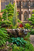 ARUNDEL CASTLE GARDENS, WEST SUSSEX: THE STUMPERY  WITH GRAVEL AND ECHIUMS, DICKSONIA ANTARCTICA. FERN, FERNS, TREE FERN, TREE FERNS, SUMMER, DOOR