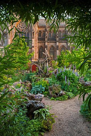 ARUNDEL_CASTLE_GARDENS_WEST_SUSSEX_THE_STUMPERY__WITH_GRAVEL_AND_ECHIUMS_DICKSONIA_ANTARCTICA_FERN_F