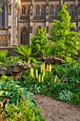 ARUNDEL CASTLE GARDENS, WEST SUSSEX: THE STUMPERY  WITH GRAVEL AND ECHIUMS, DICKSONIA ANTARCTICA. FERN, FERNS, TREE FERN, TREE FERNS, SUMMER, DOOR, WALL, LUPIN