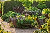 ARUNDEL CASTLE GARDENS, WEST SUSSEX: THE STUMPERY  WITH GRAVEL, TREE STUMP, EUPHORBIA, ALLIUM. HEDGE, HEDGING, HEDGES, SUMMER