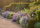 ARUNDEL CASTLE GARDENS, WEST SUSSEX: GRAVEL PATH, YEW HEDGES, NEPETA SIX HILLS GIANT AND ALLIUMS - BULB, BULBS, FLOWERS, ENGLISH GARDEN, BORDER, BORDERS, HEDGE, HEDGING