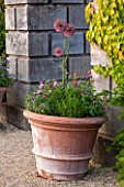ARUNDEL CASTLE GARDENS, WEST SUSSEX: COLLECTOR EARLS GARDEN DESIGNED BY JULIAN AND ISABEL BANNERMAN. TERRACOTTA CONTAINER PLANTED WITH ALLIUMS