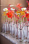 CHATSWORTH HOUSE, DERBYSHIRE:FLORABUNDANCE-A FIELD FULL OF POPPIES.POPPIES AND PRIMULAS IN OLD-FASHIONED SCHOOL MILK BOTTLES PAY HOMAGE TO THE LANDSCAPE CREATED THREE CENTURIES AGO
