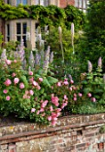 GLYNDEBOURNE, EAST SUSSEX: THE DOUBLE HERBACEOUS BORDERS WITH WHITE FOXTAIL LILIES - EREMERUS, SALVIAS - AND PINK ROSES - WALL, BRICK, BORDER, SUMMER