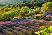 LA JEG, PROVENCE, FRANCE: DESIGNER ANTHONY PAUL - VIEW ACROSS ROWS OF LAVENDER - LAVENDULA GROSSO - TO ALMOND TREES AND COUNTRYSIDE BEYOND. , PURPLE, SUNRISE