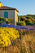 LA JEG, PROVENCE, FRANCE: DESIGNER ANTHONY PAUL - BLUE AND YELLOW PLANTING OF PEROVSKIA , LAVENDER - LAVENDULA GROSSO AND SANTOLINA CHAMAECYPARISSUS LEMON QUEEN. HOUSE, SKY, SUMMER