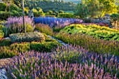 LA JEG, PROVENCE, FRANCE: DESIGNER ANTHONY PAUL - BLUE AND YELLOW PLANTING OF PEROVSKIA , LAVENDER - LAVENDULA GROSSO AND SANTOLINA CHAMAECYPARISSUS LEMON QUEEN. JUNE, SUMMER