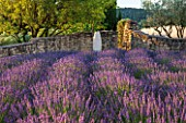 LA JEG, PROVENCE, FRANCE: DESIGNER ANTHONY PAUL - ROWS OF PURPLE LAVENDER - LAVENDULA GROSSO - LOW STONE WALL, SKY, JUNE, SUMMER, PURPLE
